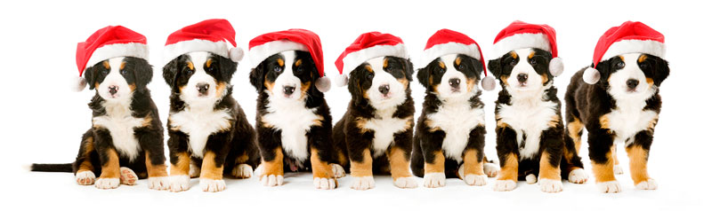 Photoshop xmas puppies